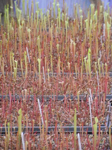 seedlings090512.jpg